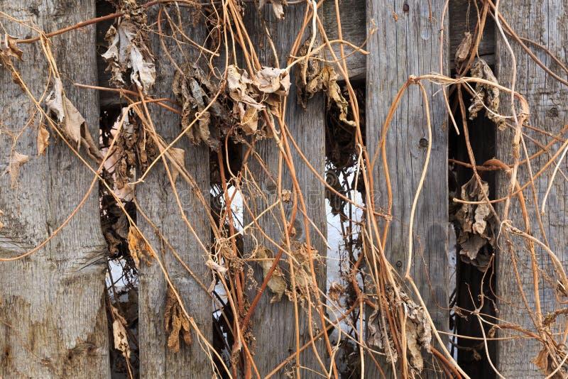 Gammalt trästaket som flätas ihop med sista års torra gräs royaltyfri fotografi