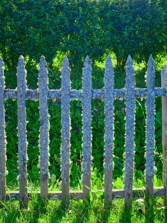 Gammalt trästaket som täckas med laven Naturlig textur av ett trästaket med laven Naturlig bakgrund av det dolda staketet för gam fotografering för bildbyråer