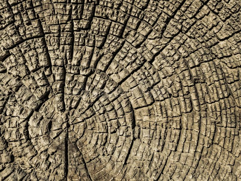 Gammalt tvärsnitt av ett träd royaltyfri fotografi