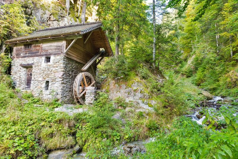 Gammalt vatten maler i skogbusksnåret Västra Carinthia, Österrike royaltyfria foton