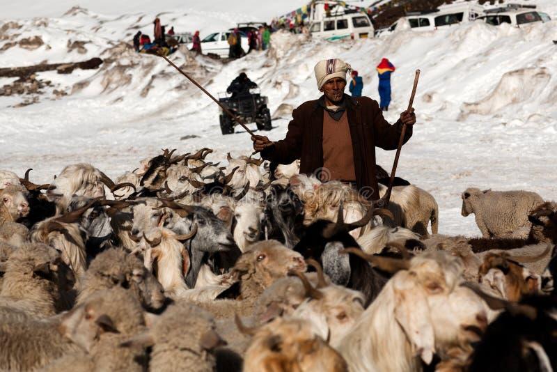 Ganadero con las cabras sobre la nieve, la India imagenes de archivo