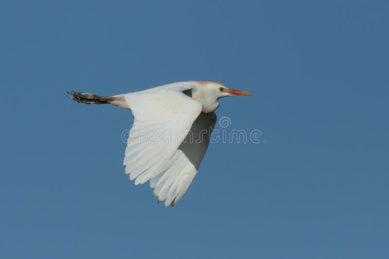 fotos gratis de pájaros de texas