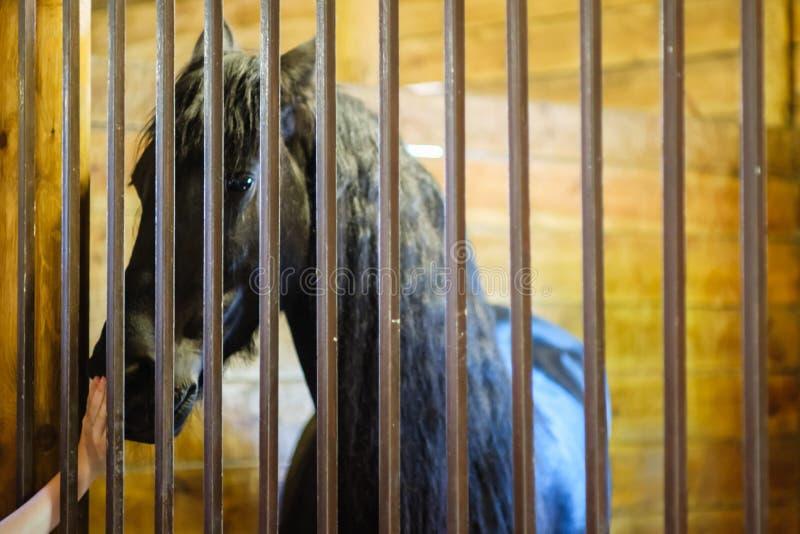 Ganado de granja estable de caballos, equino de puerta fotos de archivo