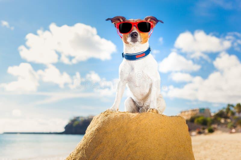 Ganador del perro foto de archivo libre de regalías