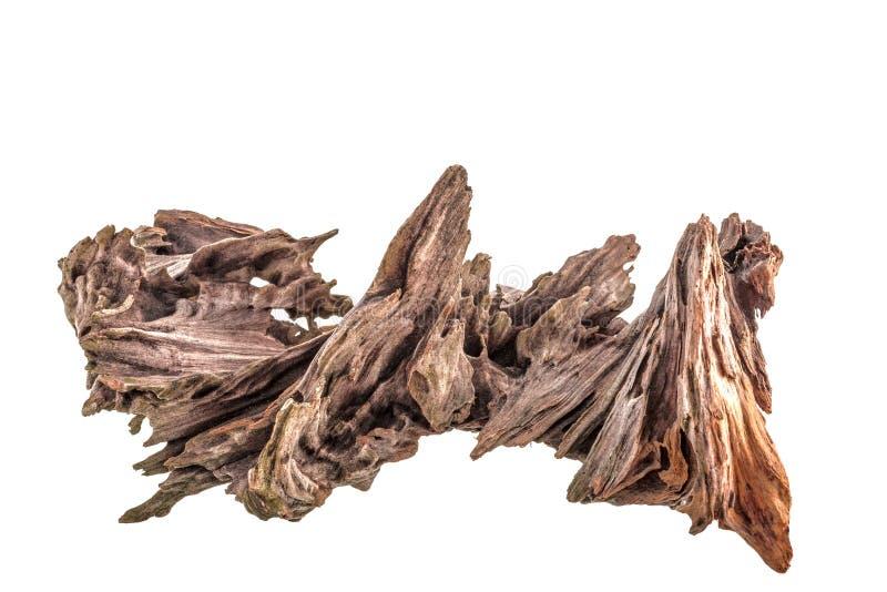 Gancho seco de un árbol conífero, madera resistida vieja del alivio aislada en un fondo blanco fotografía de archivo