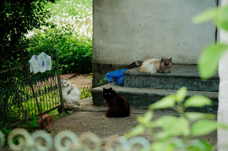 A gang of colorful cats. Sit in the courtyard of a private house and ohryanyayut door stock image