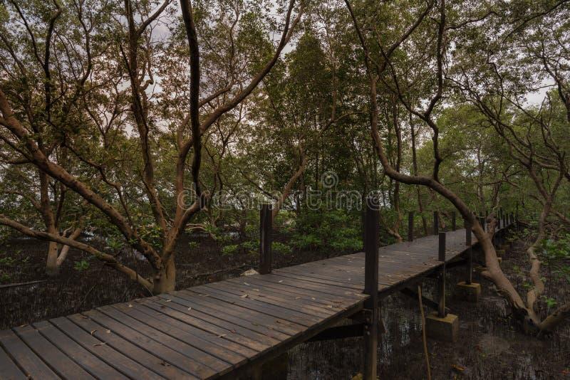 Gang in de mangrove stock afbeelding