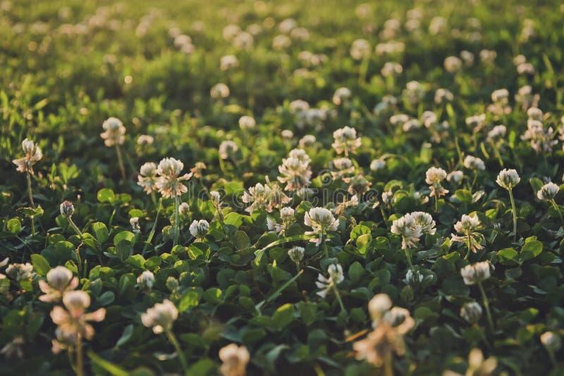 Gang door de de lenteweiden De schilderachtige aard van Engeland in de vroege lente stock foto