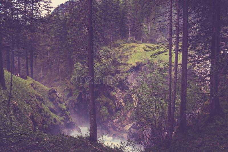 Gang in geheimzinnig donker en oud bos royalty-vrije stock afbeelding