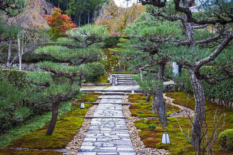 Gang in gemodelleerde tuin door een serie van Japanse pijnboomboom aan Enkoji-Tempel in Kyoto, Japan stock fotografie