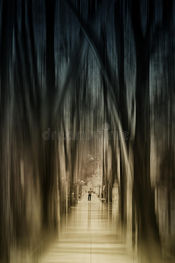 Gang in het mystieke bos van l royalty-vrije stock foto's