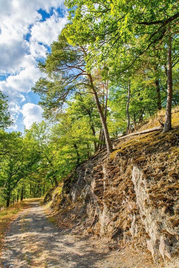 Gang langs rots met bomen in Duits bos royalty-vrije stock afbeeldingen