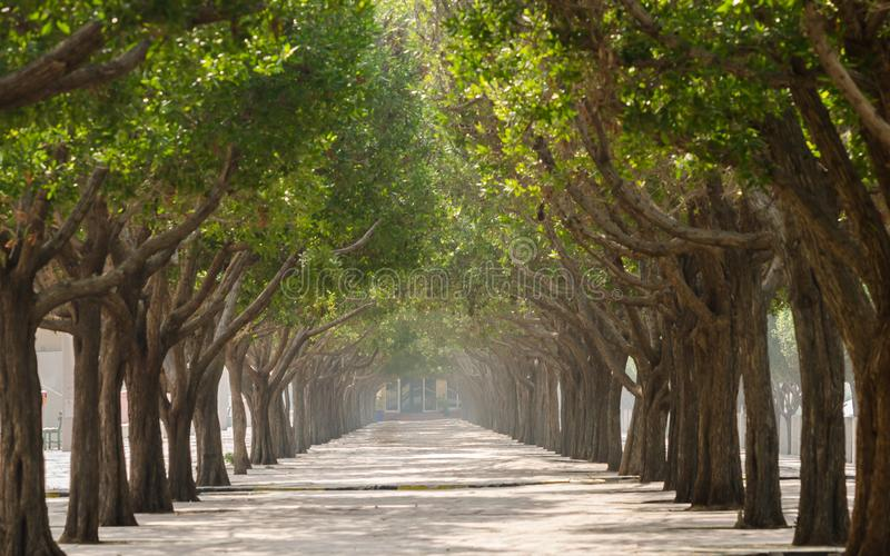 Gang met bomen in symmetrie aan beide kanten stock foto