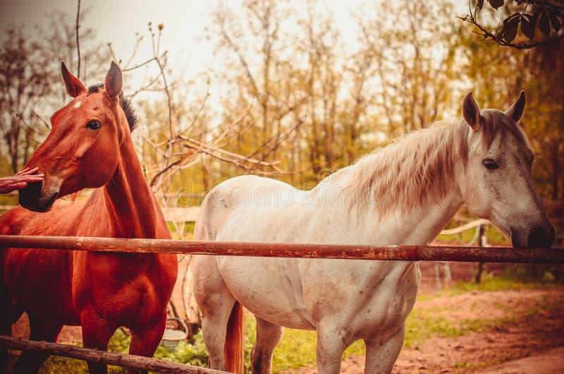 Gang met paarden stock afbeeldingen