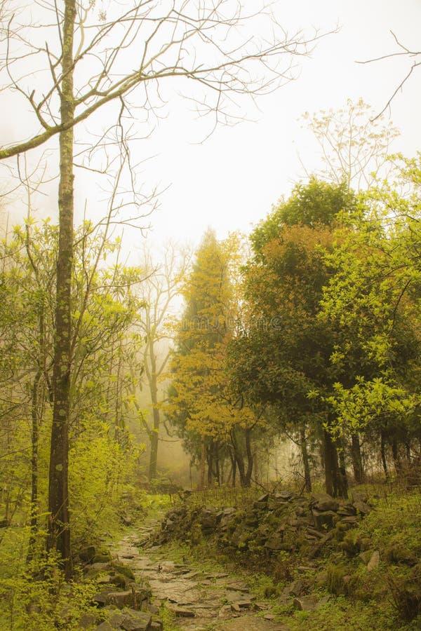 Gang in mistbos in de regenachtige dag stock foto's