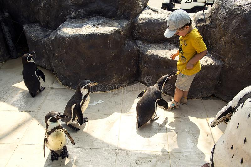 Gang of penguins attack little cute boy to take away the lollipop stock image