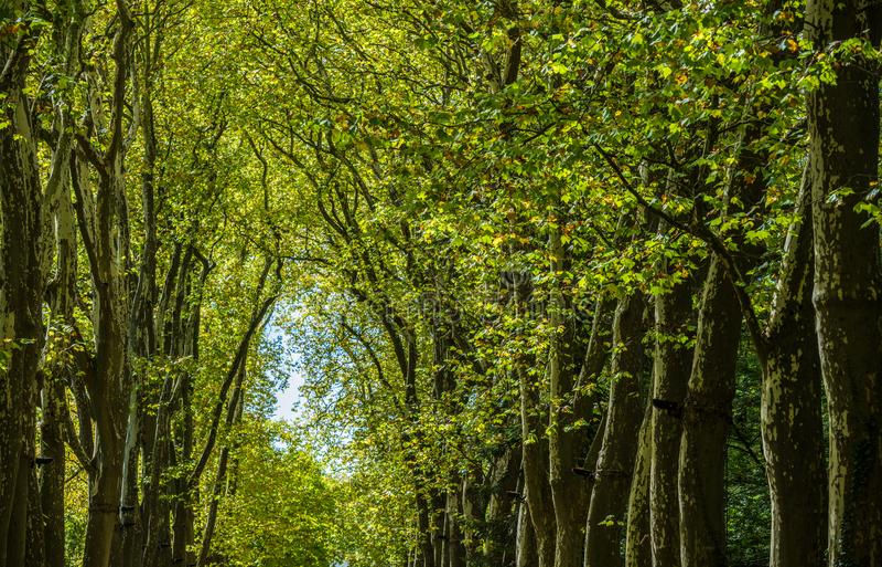 Gang, steeg, weg met groene bomen in het bos royalty-vrije stock foto