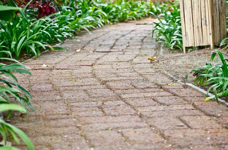 Gang in tropische tuin 8 stock fotografie