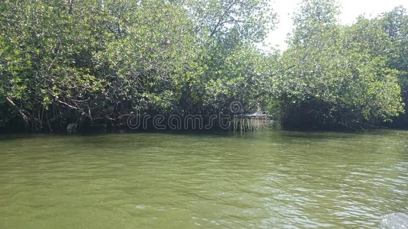 Ganga de Madu y x28; river& x29 del madu; - visión desde el barco imagen de archivo
