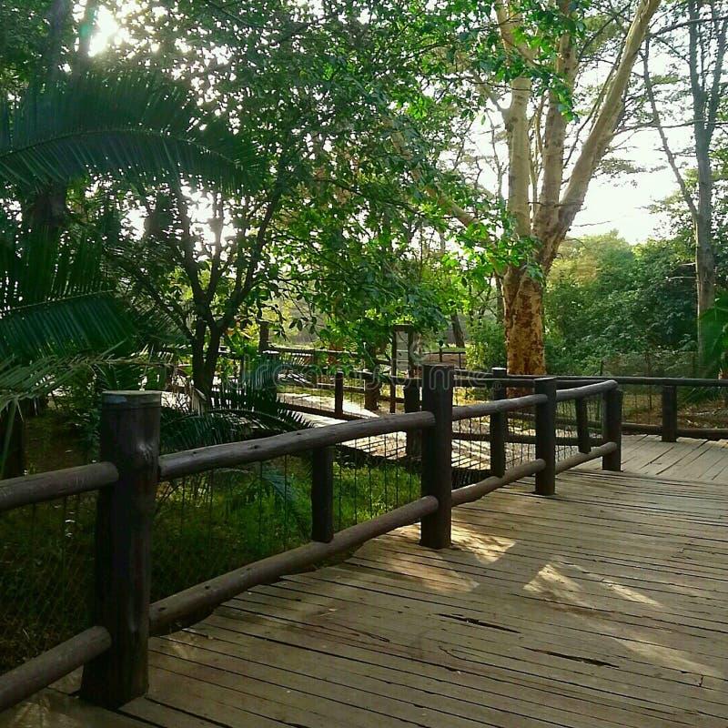 Gangbrug binnen een nationaal park stock foto's