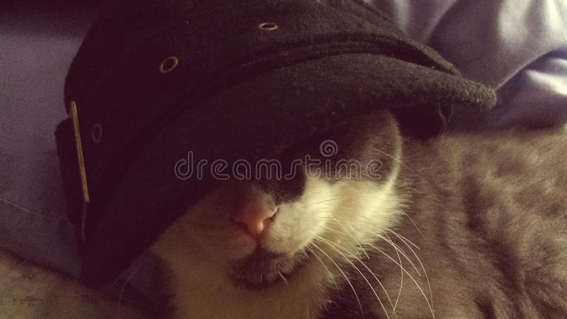Gangster Snelle Kat in hoed stock afbeeldingen