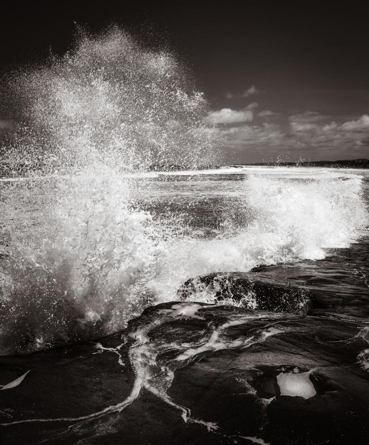 Gannet koloni Muriwai plaża blisko Auckland obrazy stock
