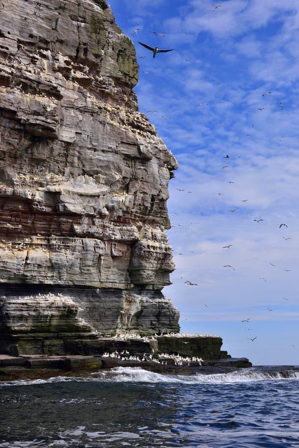 gannets imagen de archivo