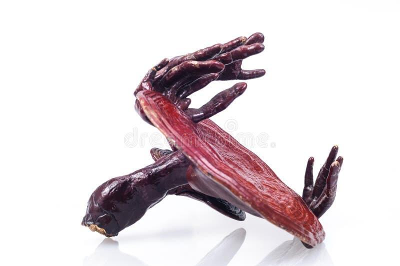 Ganoderma stock image