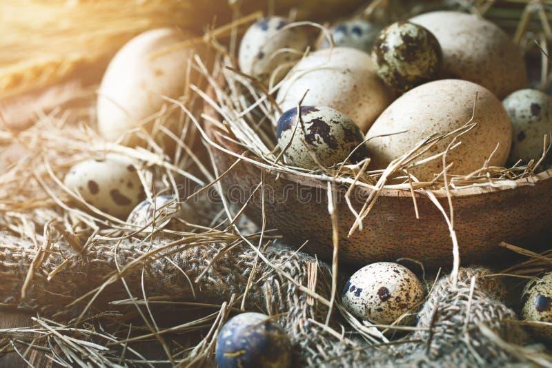 Gans en kwartelseieren tegen een donkere achtergrond Het stilleven van Pasen royalty-vrije stock fotografie