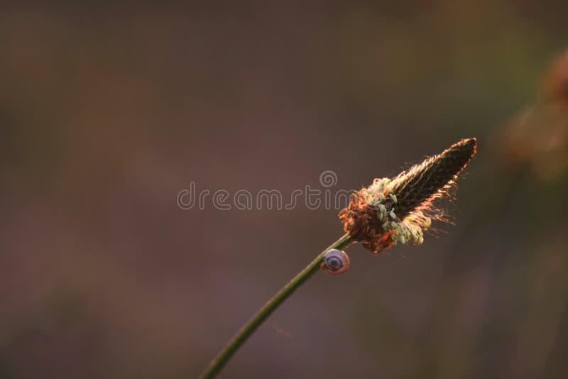 Gansgras mit einer Schnecke auf Stamm stockfoto