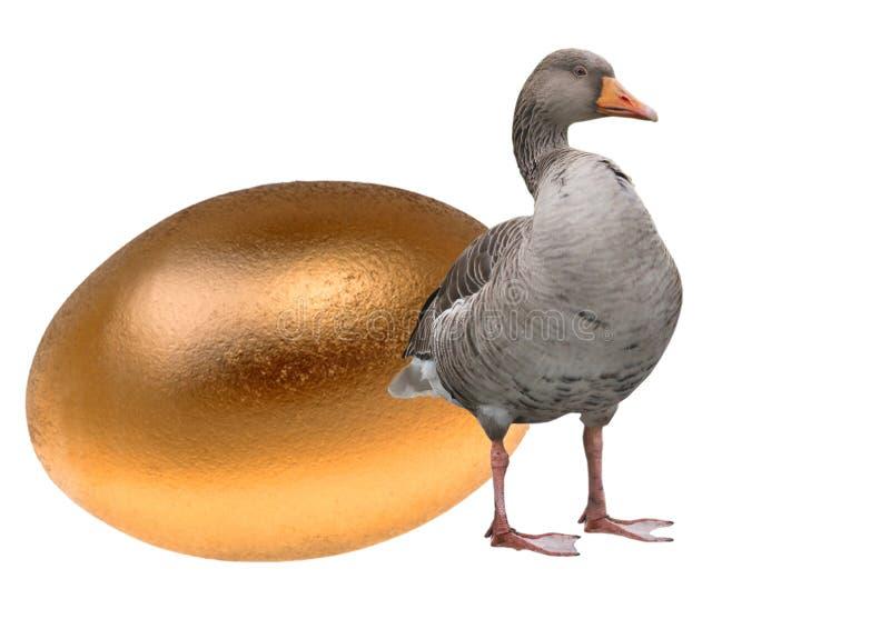 Ganso con un huevo de oro foto de archivo libre de regalías