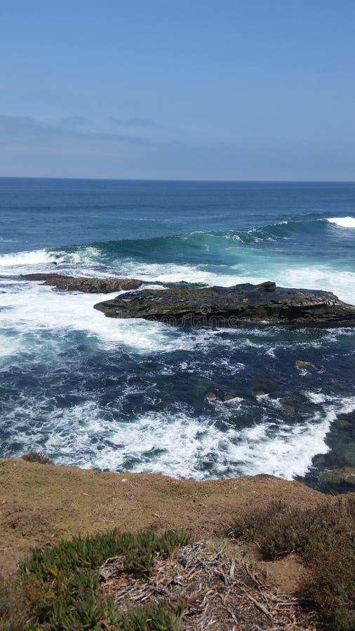 Ganso no oceano aonde as marés caem imagem de stock royalty free