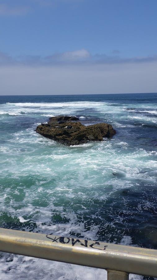 Ganso no oceano aonde as marés montam imagem de stock