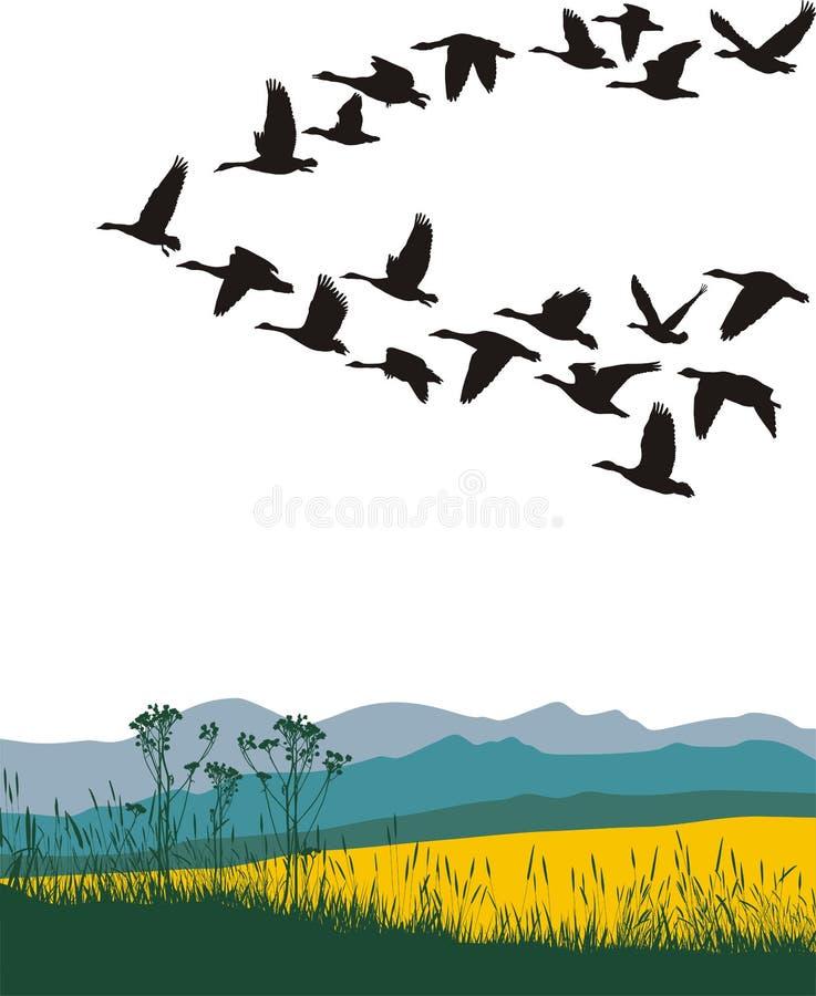 Gansos da migração na mola ilustração royalty free