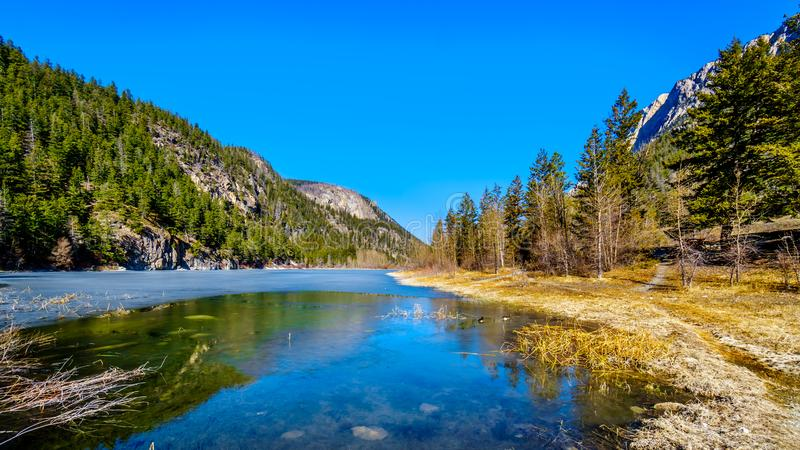 Gansos de Canad? sobre do lago no Columbia Brit?nica, Canad? crown fotos de stock royalty free