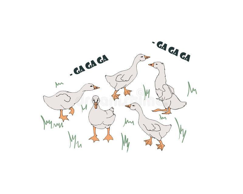 Gansos de la cr?a Ansarones que pastan en el prado libre illustration