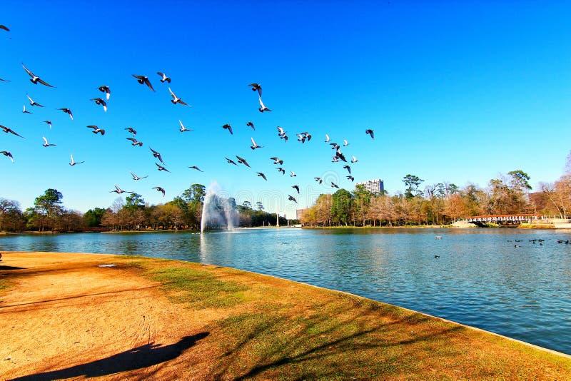 Gansos que vuelan alrededor con el cielo azul imagen de archivo