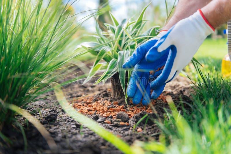 Gants blancs de port de jardinier professionnel donnant la classe principale dehors photo stock