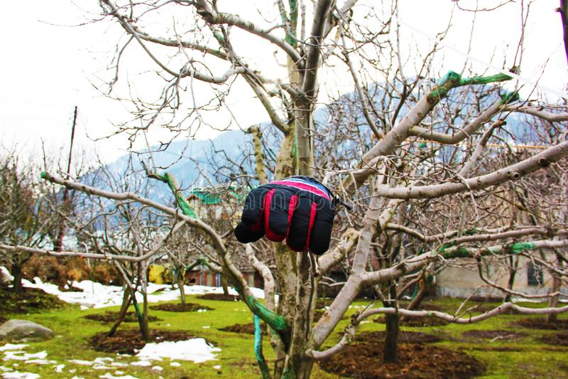 Gants d'une main sur la branche de pommier dans Manali avec le beau résumé photo libre de droits