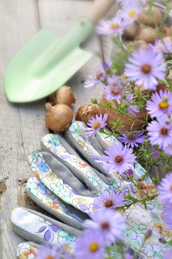 Gants de jardinage féminins photos stock