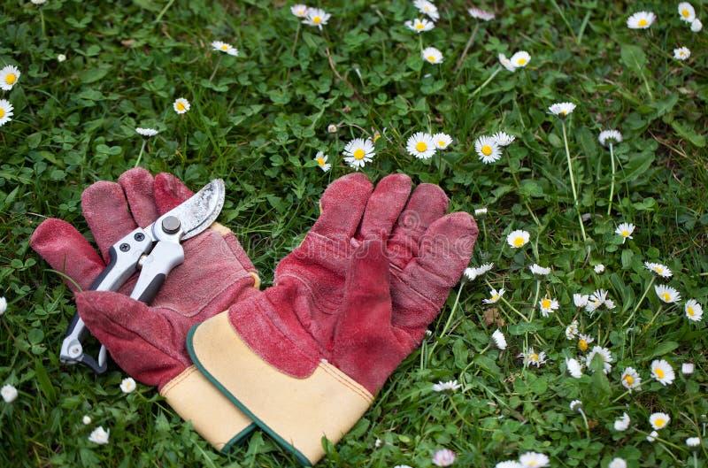 Gants protecteurs et cisailles dans l'herbe pour le jardinage photo libre de droits