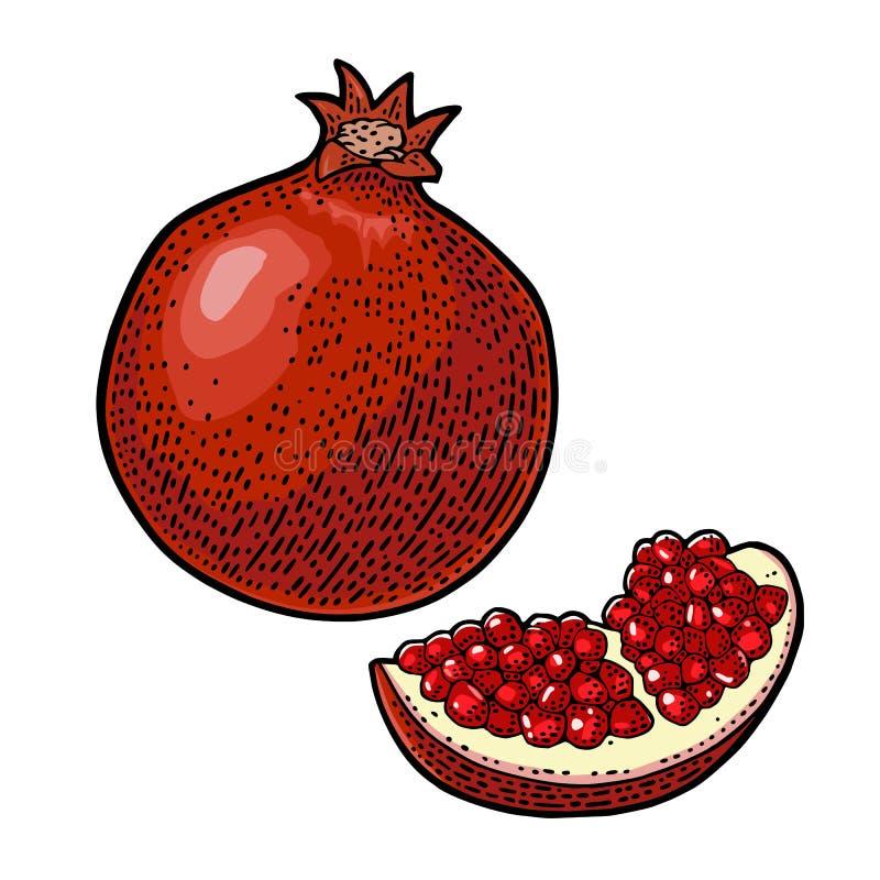 Ganz- und Scheibengranatsfrucht mit Samen Vektorstich stock abbildung