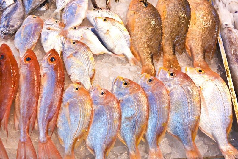 Ganze frische Fische werden angeboten lizenzfreies stockbild