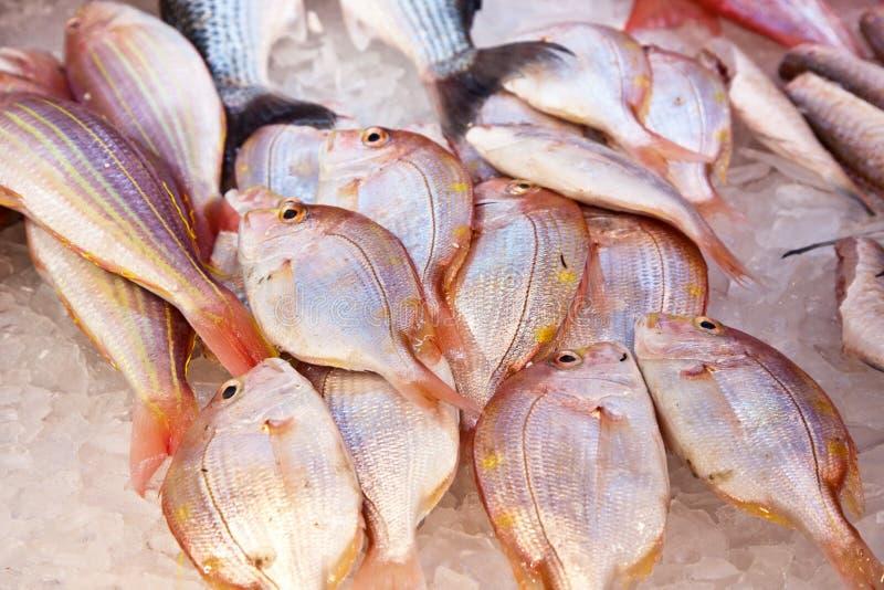 Ganze frische Fische werden angeboten lizenzfreie stockfotos