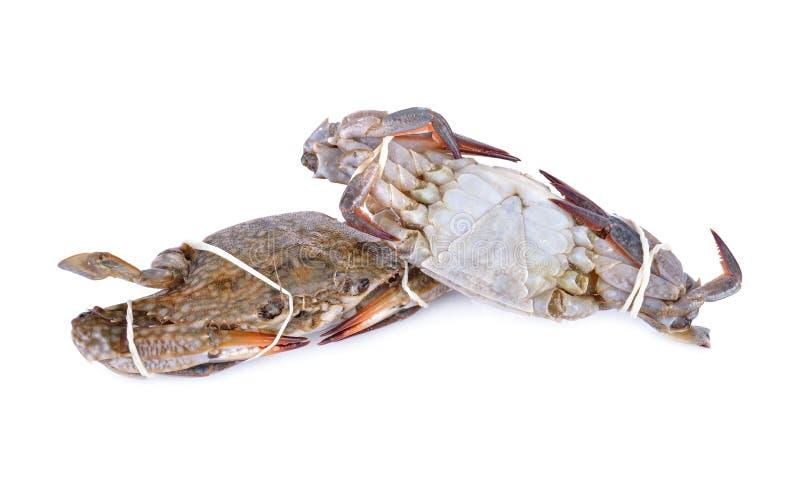Ganze runde frische blaue Krabbe auf weißem Hintergrund stockbilder