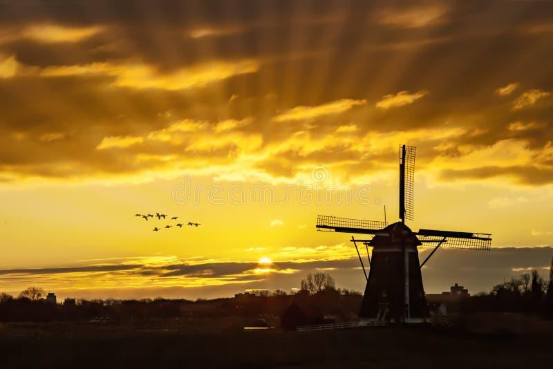 Ganzen die tegen de zonsondergang op de Nederlandse windmolen vliegen stock afbeelding