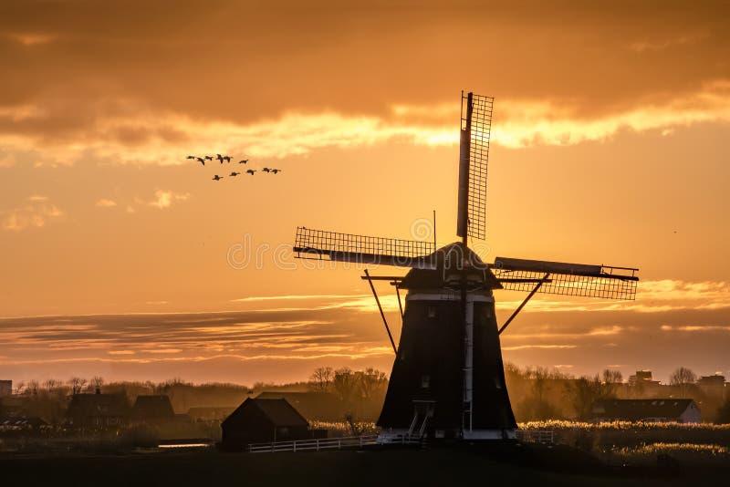 Ganzen die tegen de zonsondergang op de Nederlandse windmolen vliegen royalty-vrije stock afbeeldingen