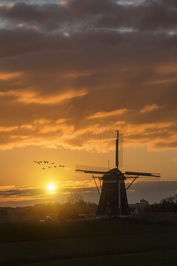 Ganzen die tegen de zonsondergang op de Nederlandse windmolen vliegen royalty-vrije stock afbeelding