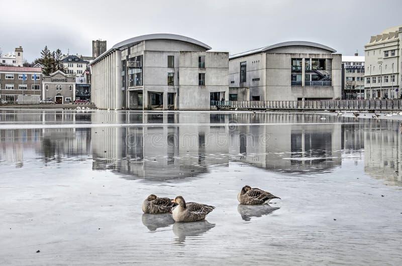 Ganzen op het ijs dichtbij het stadhuis royalty-vrije stock afbeelding