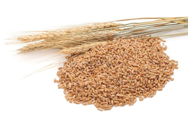 Ganzes Korn des Weizens stockfotografie
